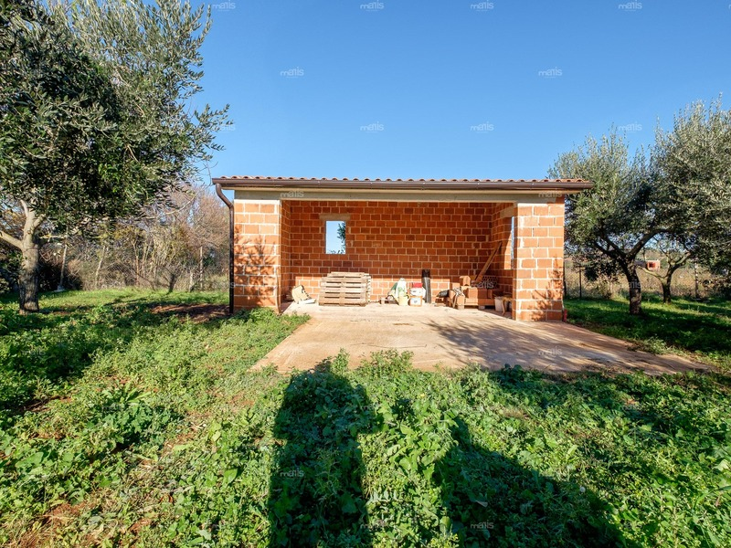 One story house surrounded by olive groves near Pula